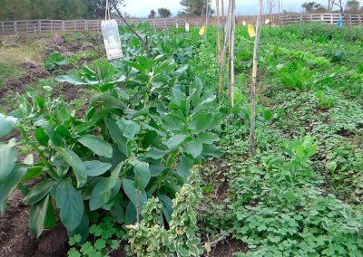 Huertas-Agroecológicas