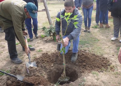 Plantación de árboles nativos
