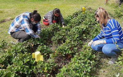 Compromiso Social Estudiantil en el Parque Agroecológico